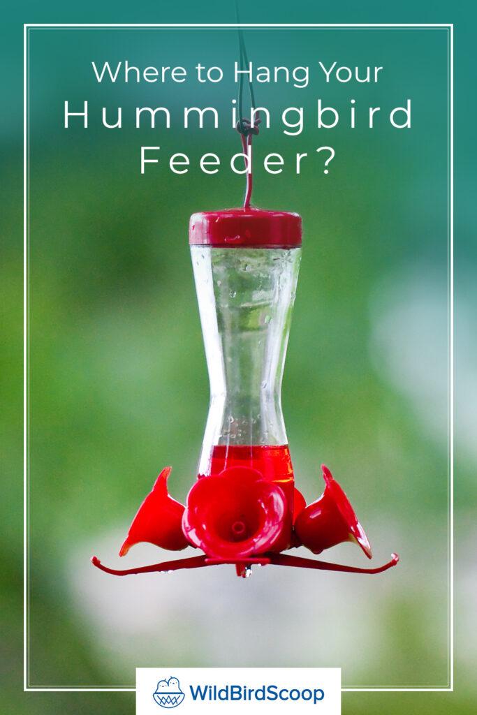 Where To Hang A Hummingbird Feeder