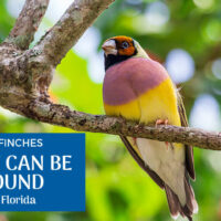 10 Finches Found in Florida