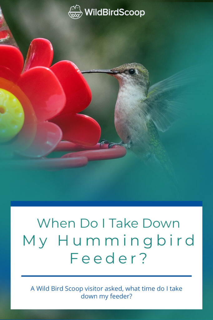 When To Take Down Hummingbird Feeder