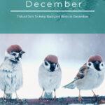 December Bird Watching Guide