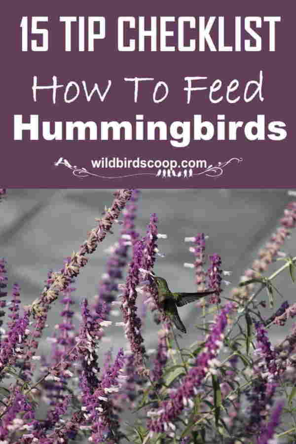 A pinterest image of a hummingbird feeding on a flower with text that reads 15 tip checklist how to feed hummingbirds.