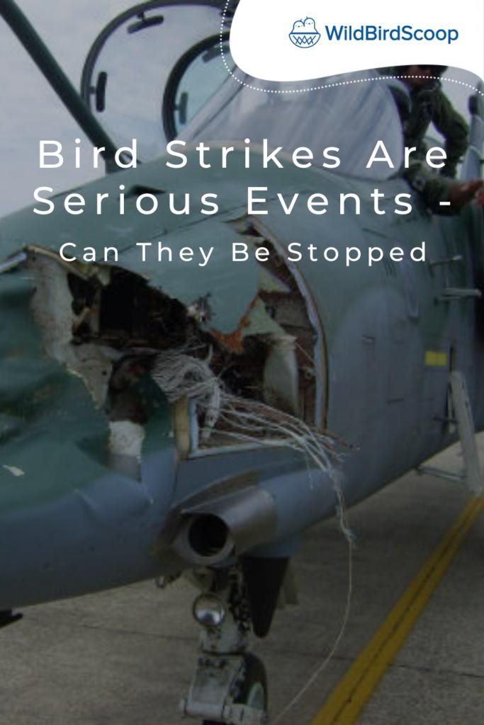 Preventing Bird Strikes