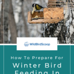 Winter Bird Feeding Tips