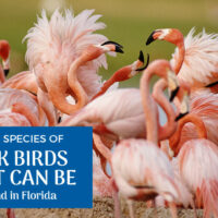 The 3 Pink Birds in Florida