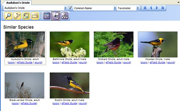 birding software to compare birds