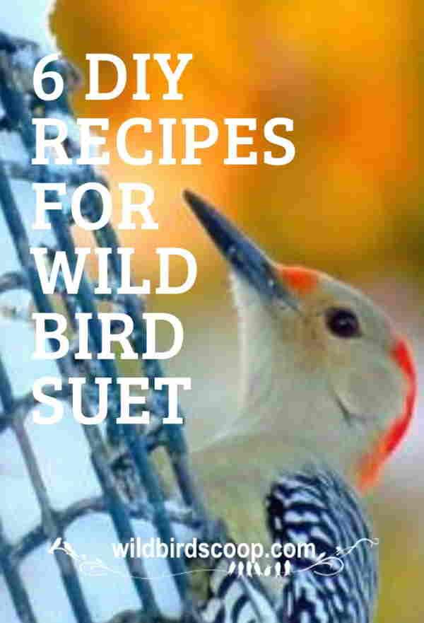 bird suet recipes