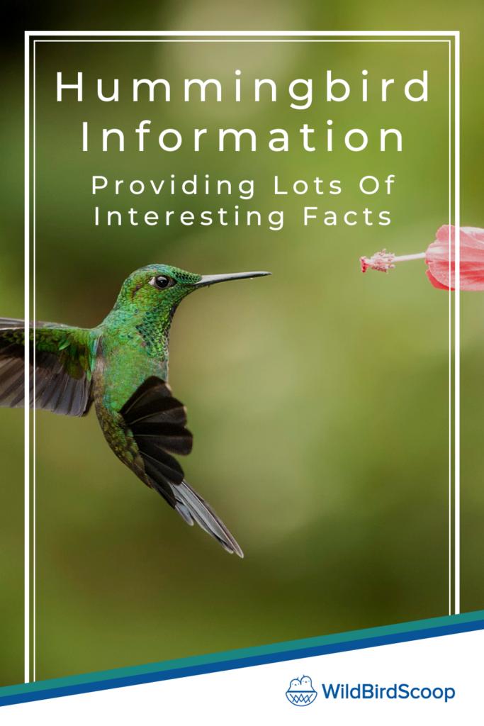 Hummingbird Information