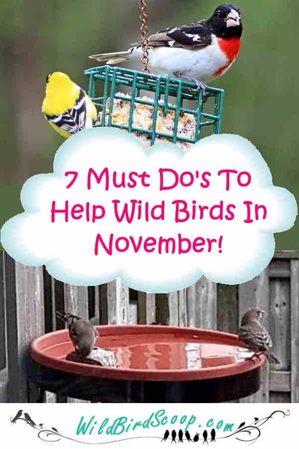 bird watching guide november