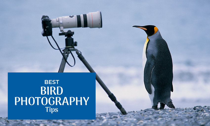 """A picture of a large camera with a penguin in front of it. Text reads """"best bird photography tips."""""""