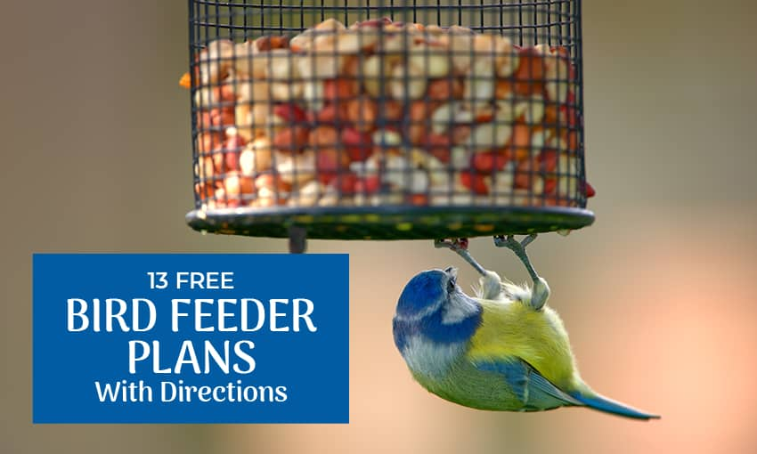 """A picture of a bird eating from a bird feeder. Text reads """"13 free bird feeder plans with directions."""""""