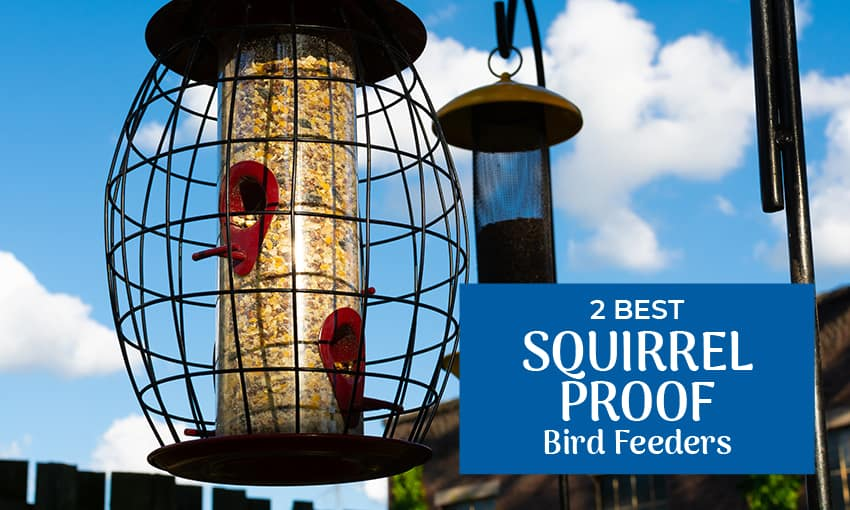 A picture of two bird feeders. Text reads