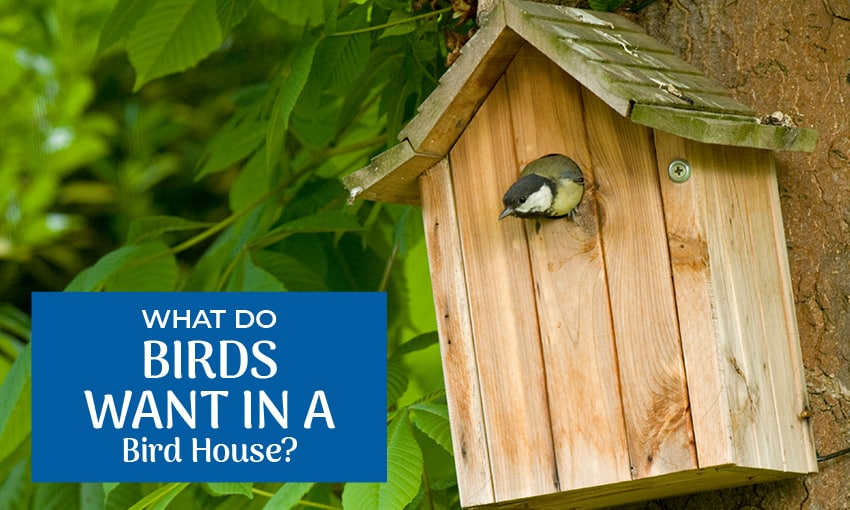 "A picture of a birds head peaking out of a wooden bird house. The text reads ""what do birds want in a bird house?"""
