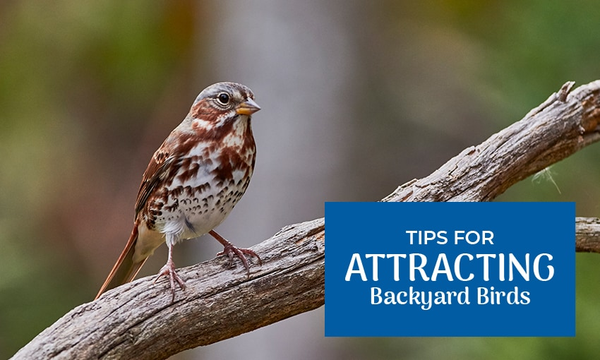 "A picture of a bird perched on a tree branch. Text reads ""tips for attracting backyard birds."""
