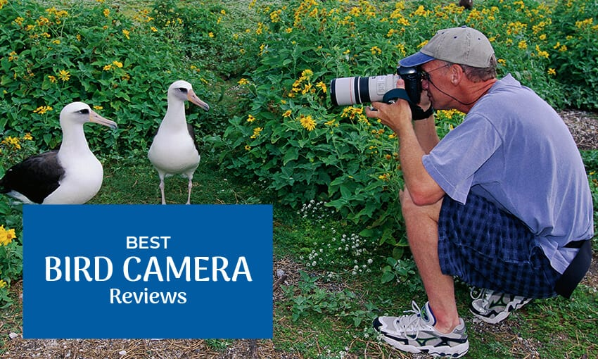 "A picture of a older male kneeling down taking a picture of two birds. Text reads ""best bird camera reviews."""