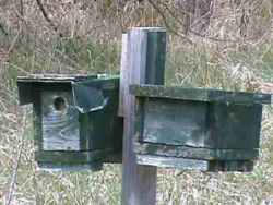 handmade bluebird houses
