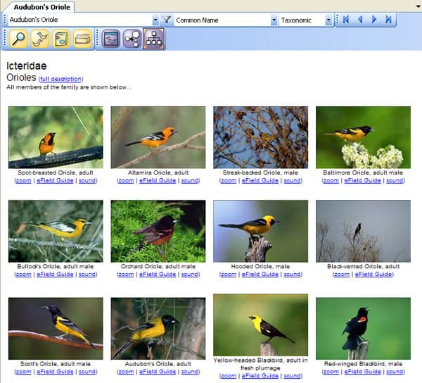 software to compare birds in groups
