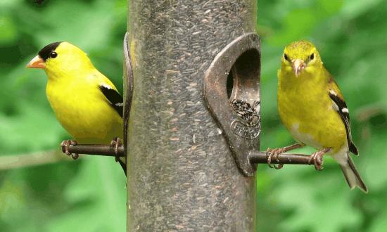 thistle feeders