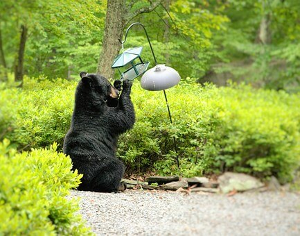 bear at bird feeder