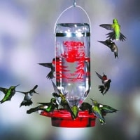 hummingbirds at glass syrup feeder