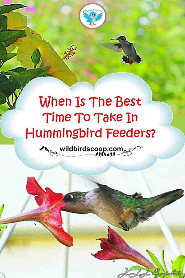 A couple different pictures of hummingbirds and flowers. Text reads when is the best time to take in hummingbird feeders?