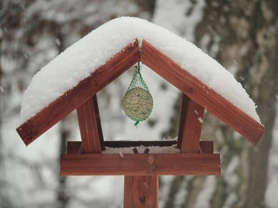 best-bird-feeders-for-winter-bird-feeding