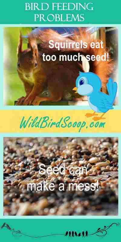 """A Pinterest image containing two pictures. One of a squirrel and one of bird seed on the ground. Text reads """"bird feeding problems."""" """"Squirrels eat too much seed!"""" and """"Seed can make a mess."""""""