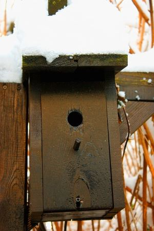 bird-house-as-roosting-box