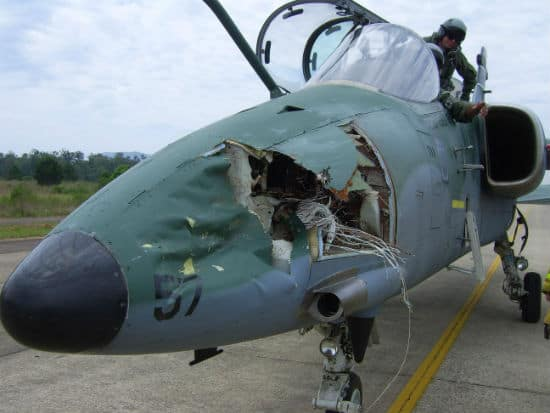bird strike causes jet damage