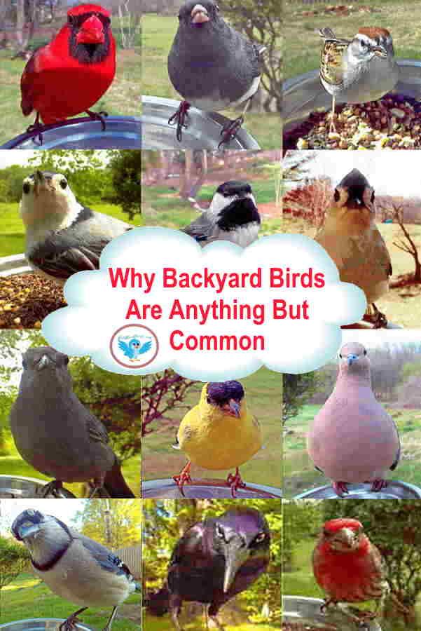 bird-types