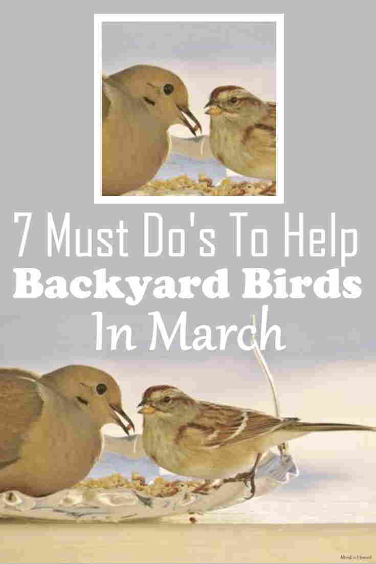 bird watching guide march