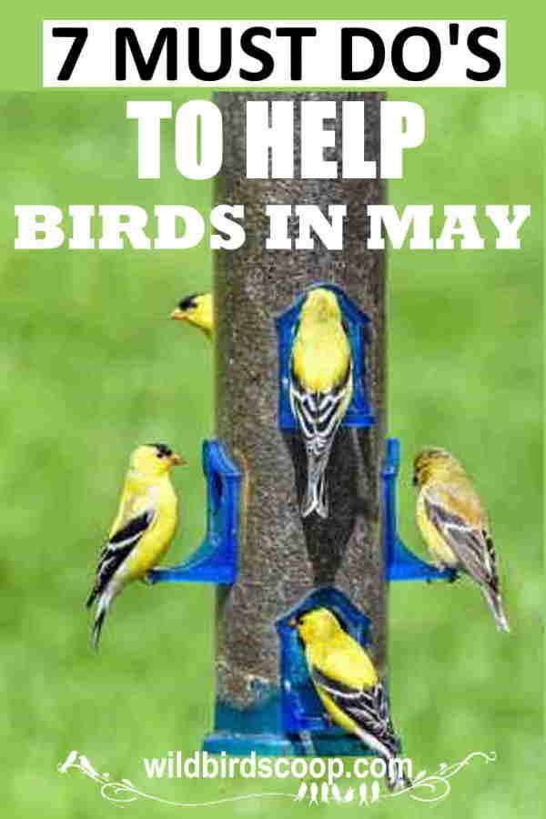 bird-watching-guide-may