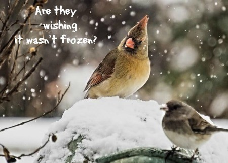 """A picture of a frozen over birdbath with a cardinal on top of it. Text read """"are they wishing it wasn't frozen?"""""""