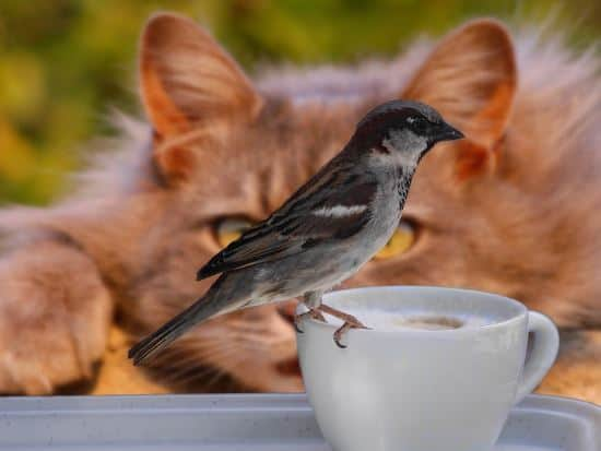 A picture of a bird on a coffee mug with a cat in the background looking at the bird.