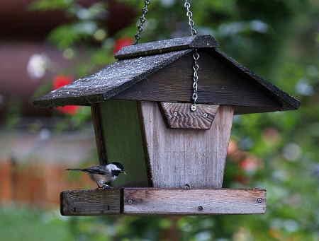 chickadee at chalet feeder