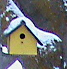 diy bird house covered in now. Yellowish in color.