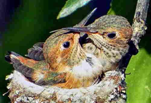 watching birds nest