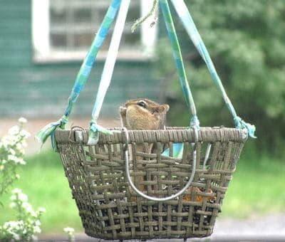 diy-basket-squirrel-feeder