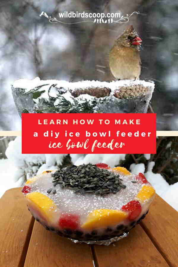 ice-bowl-feeder