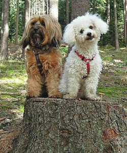 dogs using dead tree to sit on.