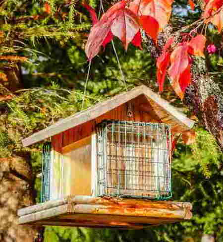 A bird house with suet feeders on the end. Pretty autumn leaves in the trees.
