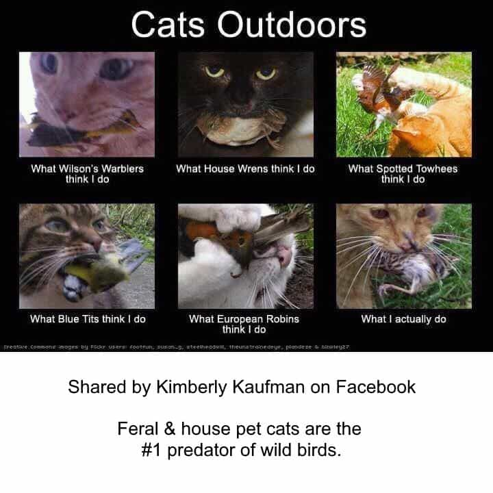 "6 Pictures of cats playing with birds or having birds in their mouths. Text reads ""cats outdoors."""