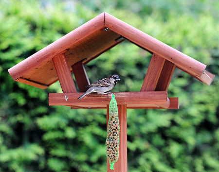 A bird eating at a fly thru feeder