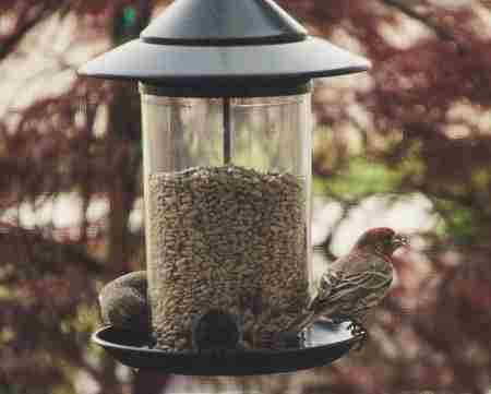 gazebo style bird feeder with two birds eating from it.