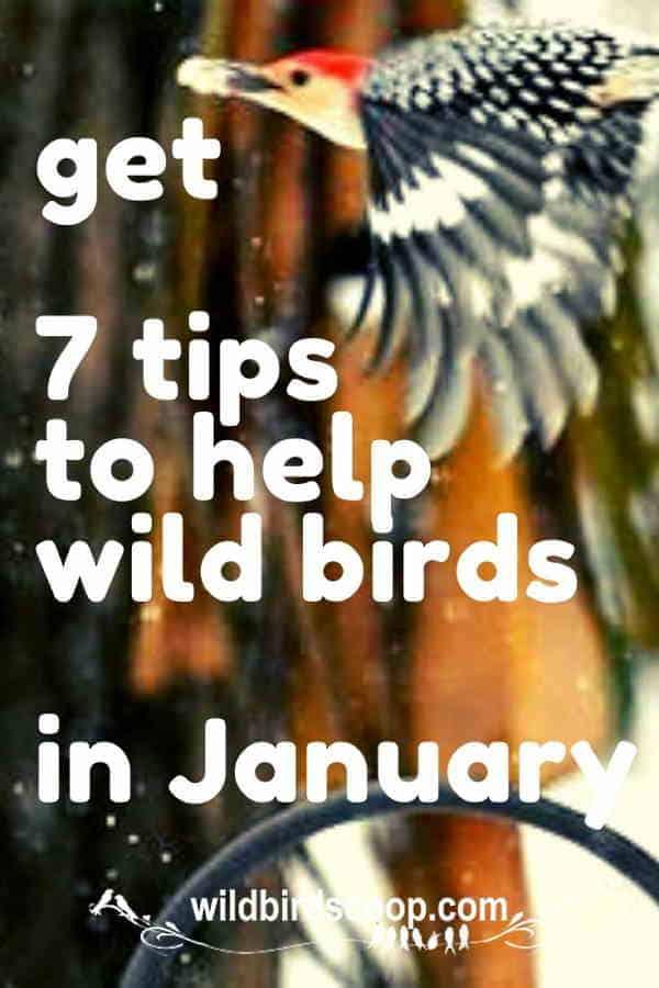 get-7-tips-to-help-wild-birds-in-january