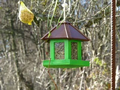 A picture of a green hopper feeder and suet feeder