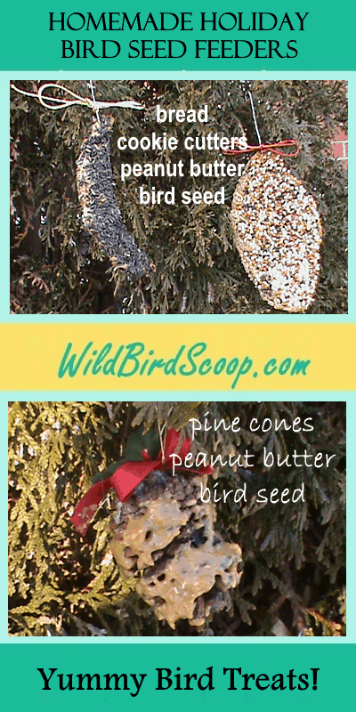 "A Pinterest image of holiday bird seed feeders with the heading text ""homemade holiday bird seed feeders."""