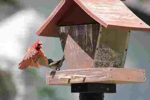 hopper bird feeder with cardinal approaching it.