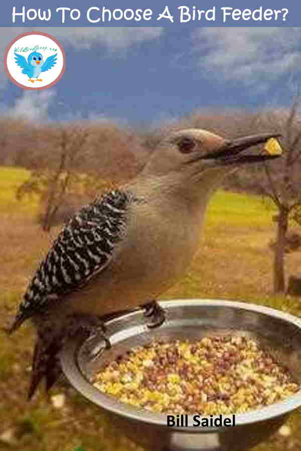 how-to-choose-the-right-bird-feeder
