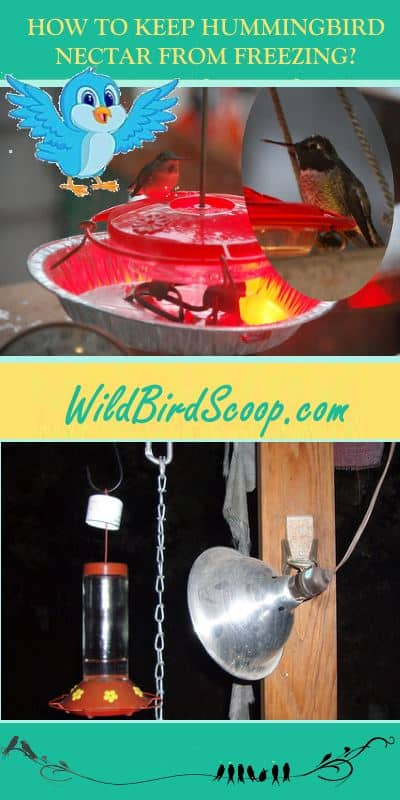 "Images of two hummingbird feeds one with a heat lamp pointed at it to keep the nectar from freezing. Text reads ""how to keep hummingbird nectar from freezing."""