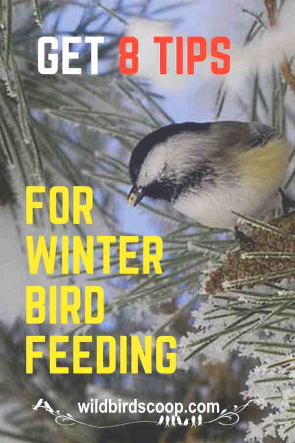 how-to-prepare-for-winter-bird-feeding-in-8-steps